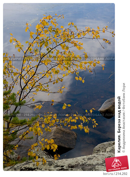 Карелия. Береза над водой, фото № 214292, снято 15 сентября 2007 г. (c) Андрюхина Анастасия / Фотобанк Лори