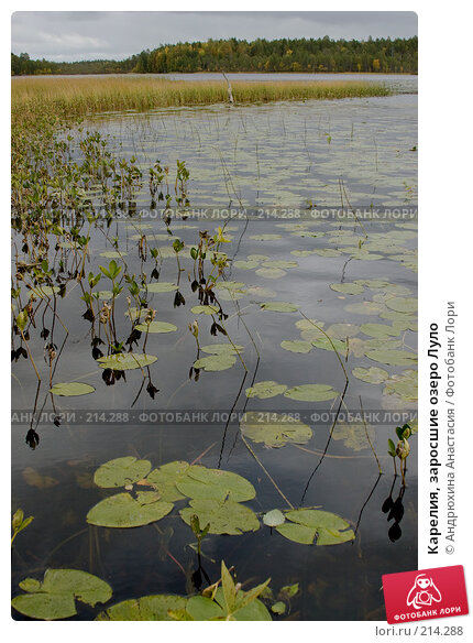 Карелия, заросшие озеро Луло, фото № 214288, снято 15 сентября 2007 г. (c) Андрюхина Анастасия / Фотобанк Лори