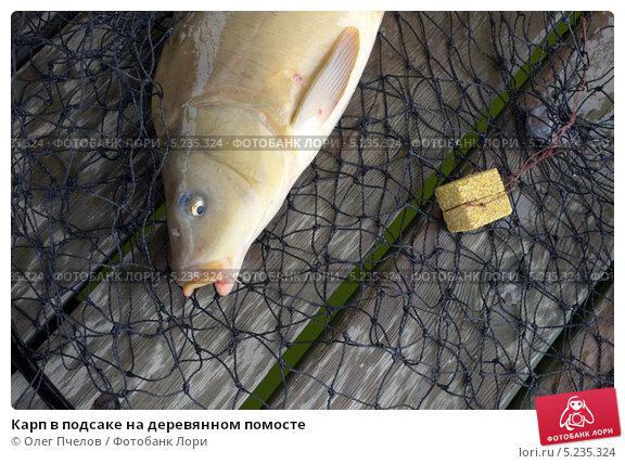 Купить «Карп в подсаке на деревянном помосте», фото № 5235324, снято 19 октября 2013 г. (c) Олег Пчелов / Фотобанк Лори
