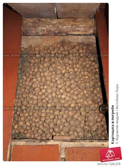 Купить «Картошка в погребе», эксклюзивное фото № 124216, снято 6 октября 2007 г. (c) Журавлев Андрей / Фотобанк Лори