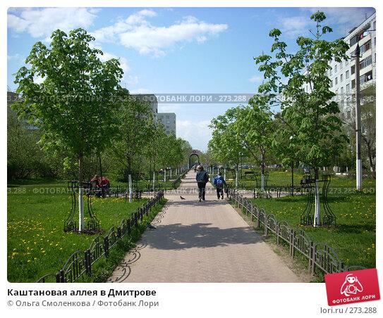 Каштановая аллея в Дмитрове, фото № 273288, снято 5 мая 2008 г. (c) Ольга Смоленкова / Фотобанк Лори