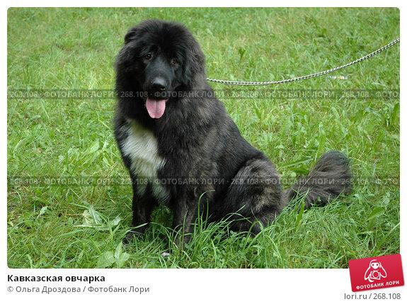 Кавказская овчарка, фото № 268108, снято 5 августа 2006 г. (c) Ольга Дроздова / Фотобанк Лори