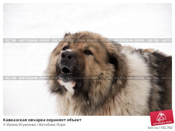 Кавказская овчарка охраняет объект, фото № 192760, снято 2 февраля 2008 г. (c) Ирина Игумнова / Фотобанк Лори