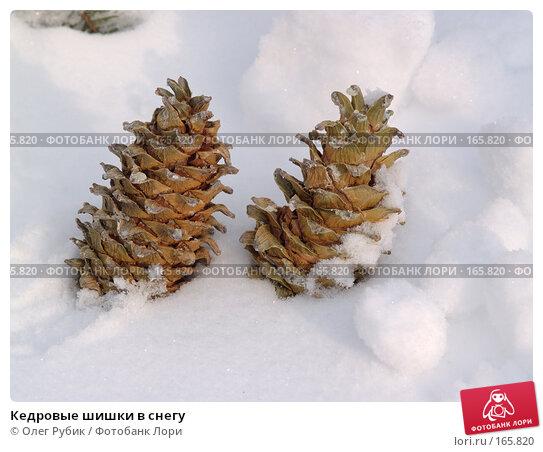 Кедровые шишки в снегу, фото № 165820, снято 30 декабря 2007 г. (c) Олег Рубик / Фотобанк Лори