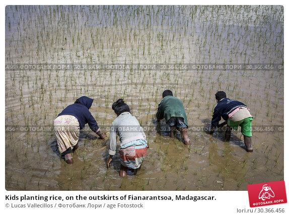 Купить «Kids planting rice, on the outskirts of Fianarantsoa, Madagascar.», фото № 30366456, снято 17 июня 2019 г. (c) age Fotostock / Фотобанк Лори