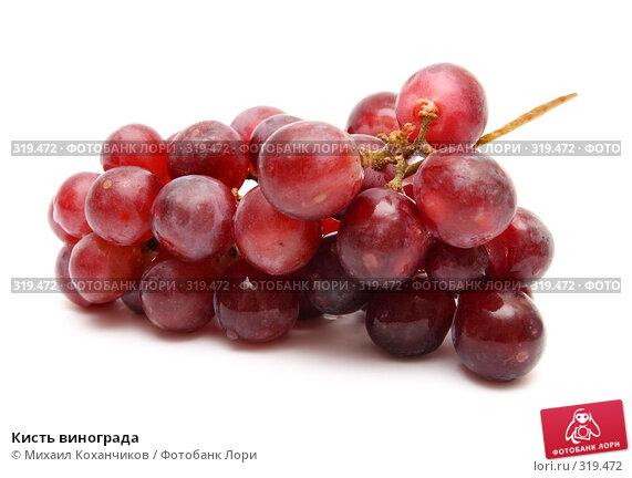 Кисть винограда, фото № 319472, снято 8 июня 2008 г. (c) Михаил Коханчиков / Фотобанк Лори
