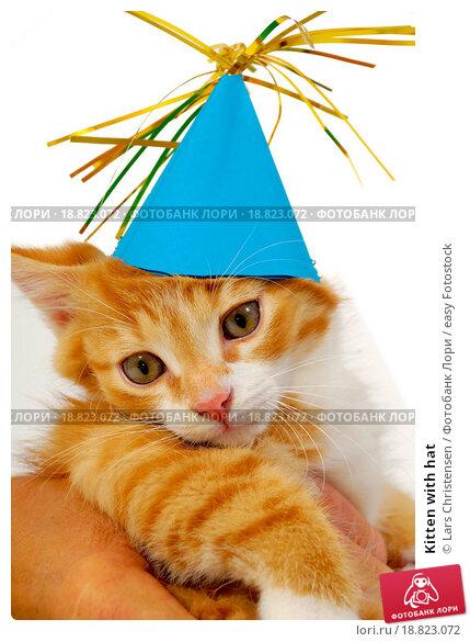 Купить «Kitten with hat», фото № 18823072, снято 16 июля 2019 г. (c) easy Fotostock / Фотобанк Лори