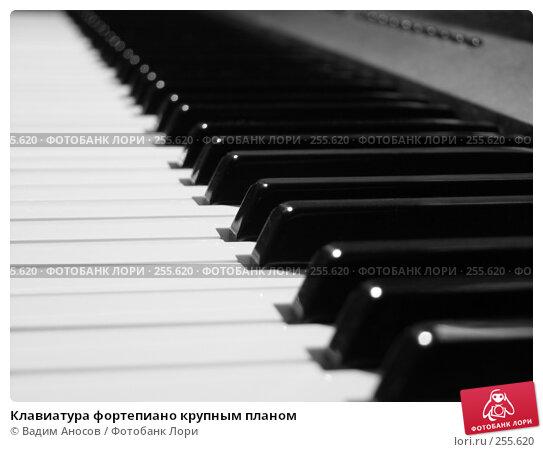 Клавиатура фортепиано крупным планом, фото № 255620, снято 30 марта 2017 г. (c) Вадим Аносов / Фотобанк Лори