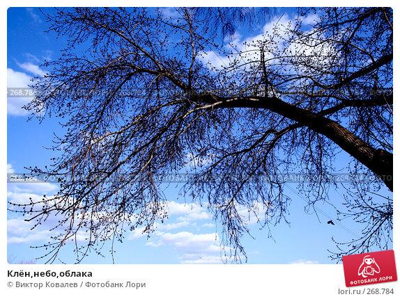Клён,небо,облака, фото № 268784, снято 26 апреля 2008 г. (c) Виктор Ковалев / Фотобанк Лори