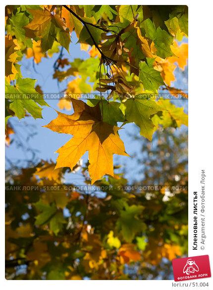 Кленовые листья, фото № 51004, снято 9 октября 2005 г. (c) Argument / Фотобанк Лори