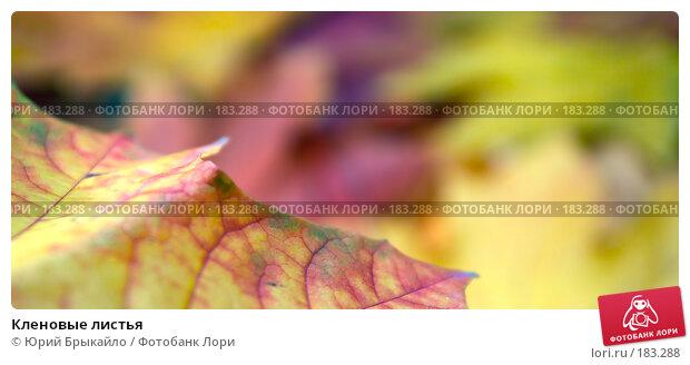 Кленовые листья, фото № 183288, снято 22 октября 2007 г. (c) Юрий Брыкайло / Фотобанк Лори