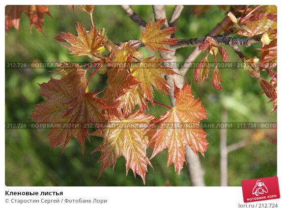 Кленовые листья, фото № 212724, снято 16 мая 2007 г. (c) Старостин Сергей / Фотобанк Лори