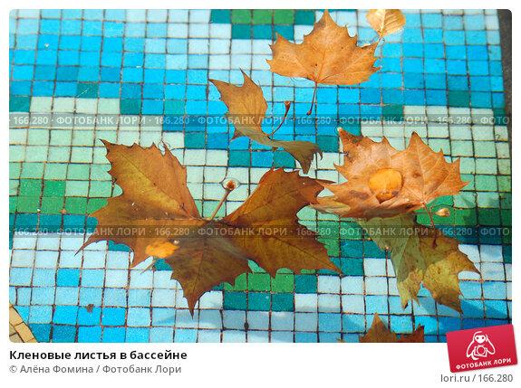 Кленовые листья в бассейне, фото № 166280, снято 11 ноября 2007 г. (c) Алёна Фомина / Фотобанк Лори
