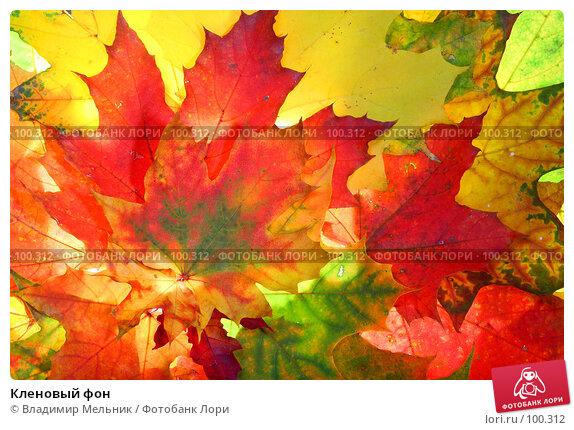 Кленовый фон, фото № 100312, снято 4 октября 2007 г. (c) Владимир Мельник / Фотобанк Лори