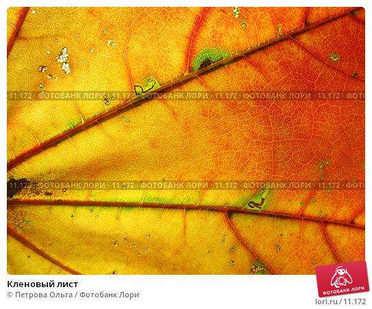 Кленовый лист, фото № 11172, снято 10 октября 2006 г. (c) Петрова Ольга / Фотобанк Лори
