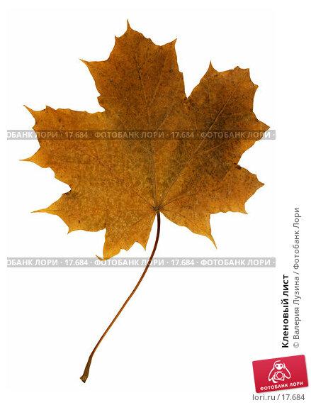 Купить «Кленовый лист», фото № 17684, снято 12 октября 2006 г. (c) Валерия Потапова / Фотобанк Лори