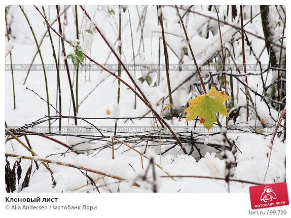 Кленовый лист, фото № 99720, снято 16 октября 2007 г. (c) Alla Andersen / Фотобанк Лори