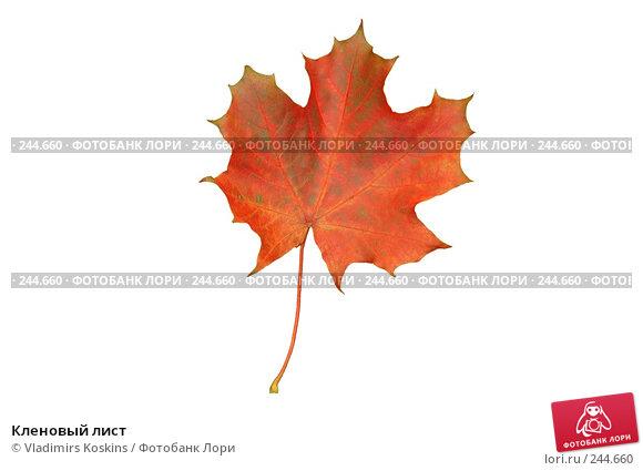 Кленовый лист, фото № 244660, снято 14 октября 2005 г. (c) Vladimirs Koskins / Фотобанк Лори