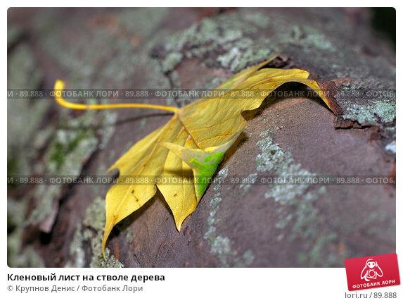 Купить «Кленовый лист на стволе дерева», фото № 89888, снято 26 августа 2007 г. (c) Крупнов Денис / Фотобанк Лори