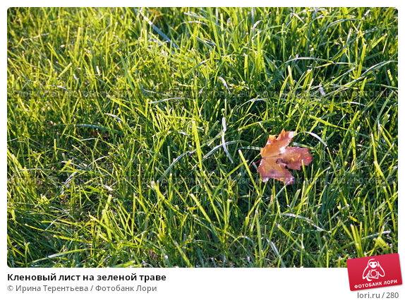 Кленовый лист на зеленой траве, эксклюзивное фото № 280, снято 27 марта 2017 г. (c) Ирина Терентьева / Фотобанк Лори
