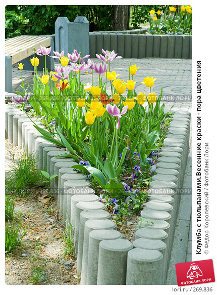 Клумба с тюльпанами.Весенние краски - пора цветения, фото № 269836, снято 1 мая 2008 г. (c) Федор Королевский / Фотобанк Лори
