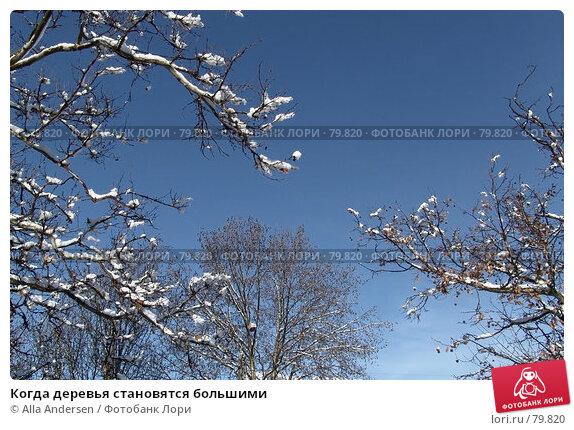 Когда деревья становятся большими, фото № 79820, снято 4 марта 2006 г. (c) Alla Andersen / Фотобанк Лори