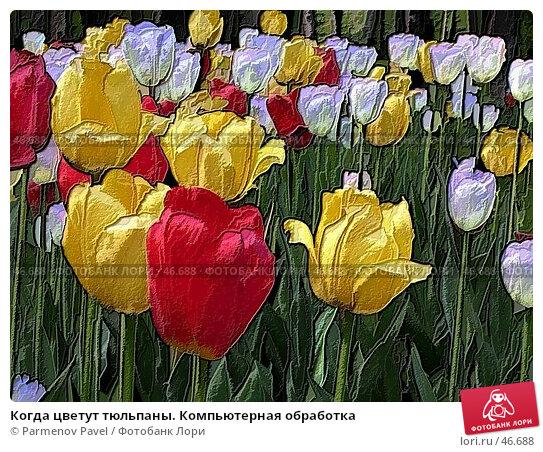 Когда цветут тюльпаны. Компьютерная обработка, фото № 46688, снято 29 мая 2004 г. (c) Parmenov Pavel / Фотобанк Лори