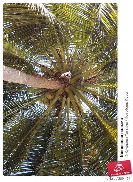 Купить «Кокосовая пальма», фото № 209424, снято 3 декабря 2005 г. (c) Куликова Татьяна / Фотобанк Лори