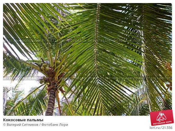 Кокосовые пальмы, фото № 21556, снято 12 февраля 2007 г. (c) Валерий Ситников / Фотобанк Лори