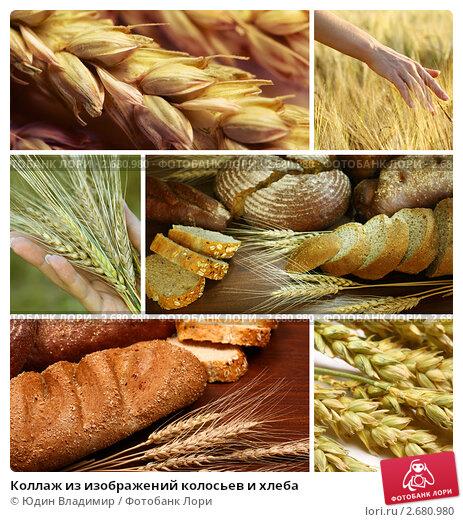Коллаж из изображений колосьев и хлеба. Стоковое фото, фотограф Юдин Владимир / Фотобанк Лори