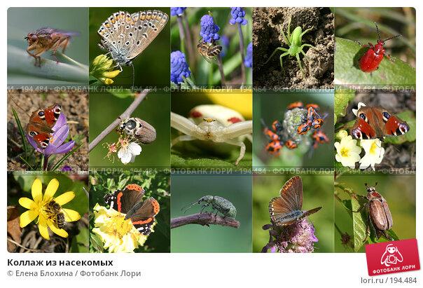 Коллаж из насекомых, фото № 194484, снято 19 января 2017 г. (c) Елена Блохина / Фотобанк Лори