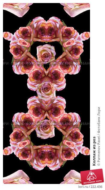 Коллаж из роз, иллюстрация № 222436 (c) Parmenov Pavel / Фотобанк Лори