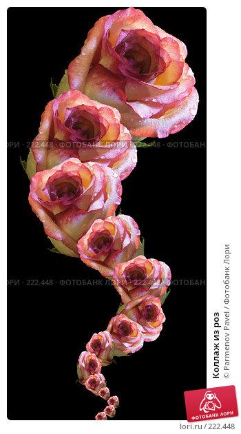 Коллаж из роз, иллюстрация № 222448 (c) Parmenov Pavel / Фотобанк Лори