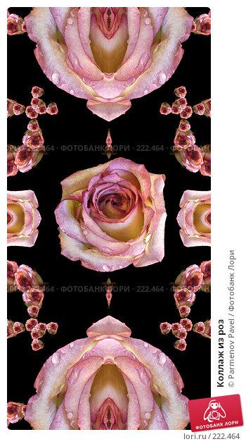 Купить «Коллаж из роз», иллюстрация № 222464 (c) Parmenov Pavel / Фотобанк Лори