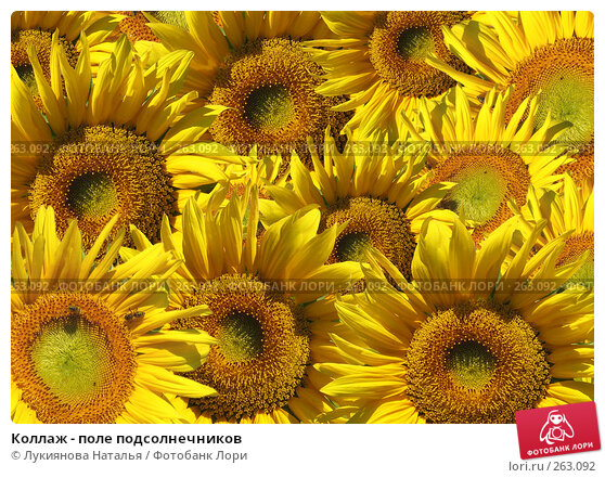 Коллаж - поле подсолнечников, иллюстрация № 263092 (c) Лукиянова Наталья / Фотобанк Лори