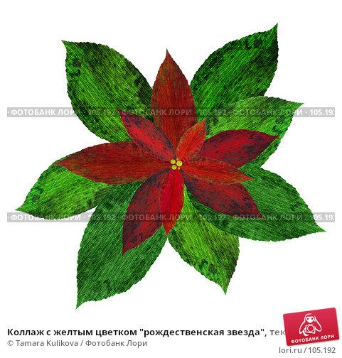 """Коллаж с желтым цветком """"рождественская звезда"""", текстура на белом, иллюстрация № 105192 (c) Tamara Kulikova / Фотобанк Лори"""