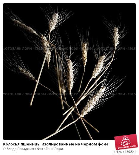 Колосья пшеницы изолированные на черном фоне, фото № 130544, снято 27 октября 2006 г. (c) Влада Посадская / Фотобанк Лори