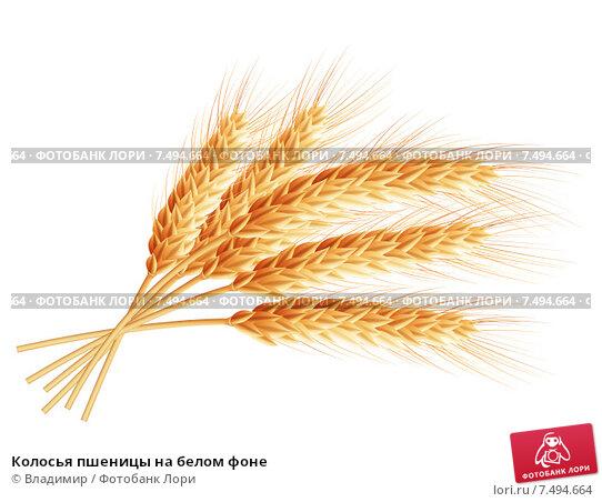 Купить «Колосья пшеницы на белом фоне», иллюстрация № 7494664 (c) Владимир / Фотобанк Лори