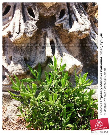 Колючая трава у обломка колонны. Эфес, Турция, фото № 8876, снято 25 марта 2017 г. (c) Маргарита Лир / Фотобанк Лори