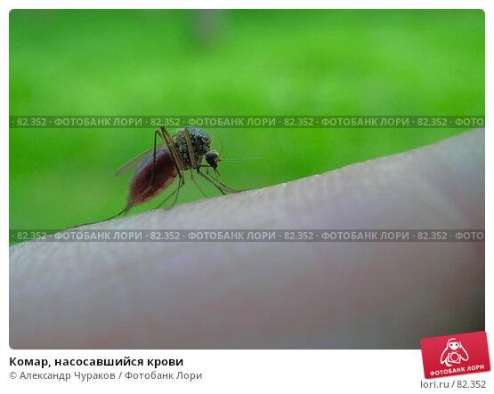 Комар, насосавшийся крови, фото № 82352, снято 12 июня 2006 г. (c) Александр Чураков / Фотобанк Лори
