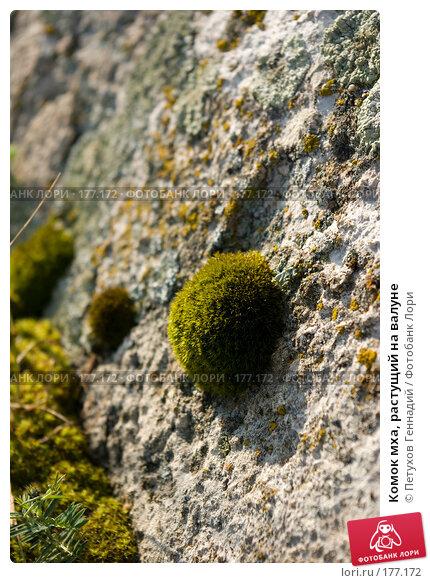 Купить «Комок мха, растущий на валуне», фото № 177172, снято 10 августа 2007 г. (c) Петухов Геннадий / Фотобанк Лори