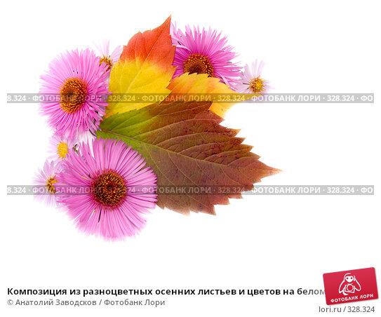 Композиция из разноцветных осенних листьев и цветов на белом фоне, фото № 328324, снято 1 октября 2006 г. (c) Анатолий Заводсков / Фотобанк Лори