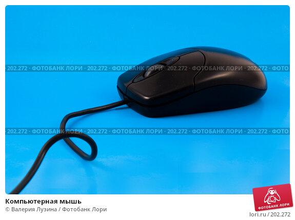 Компьютерная мышь, фото № 202272, снято 19 декабря 2007 г. (c) Валерия Потапова / Фотобанк Лори