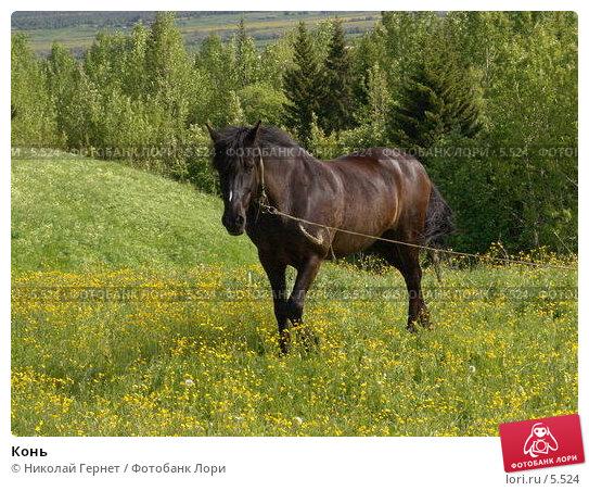 Конь , фото № 5524, снято 18 июня 2005 г. (c) Николай Гернет / Фотобанк Лори
