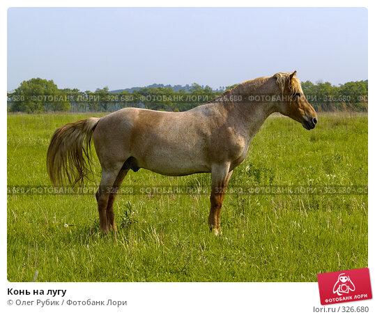 Конь на лугу, фото № 326680, снято 9 июня 2008 г. (c) Олег Рубик / Фотобанк Лори