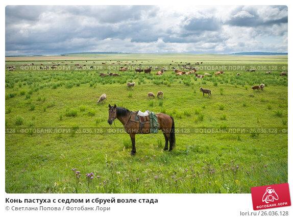 Конь пастуха с седлом и сбруей возле стада, фото № 26036128, снято 3 августа 2015 г. (c) Светлана Попова / Фотобанк Лори