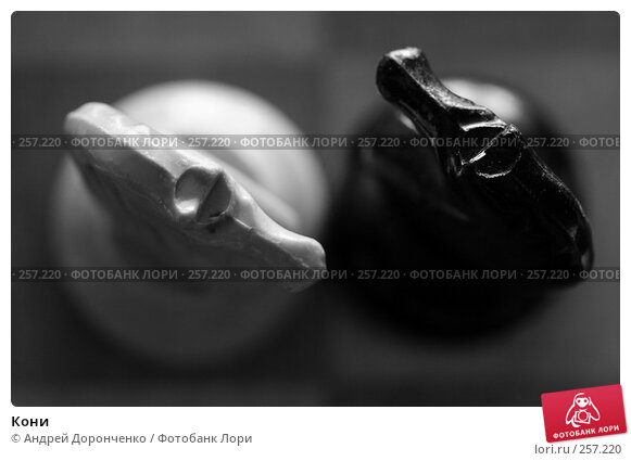 Кони, фото № 257220, снято 19 августа 2017 г. (c) Андрей Доронченко / Фотобанк Лори