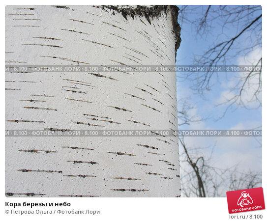 Кора березы и небо, фото № 8100, снято 5 марта 2006 г. (c) Петрова Ольга / Фотобанк Лори