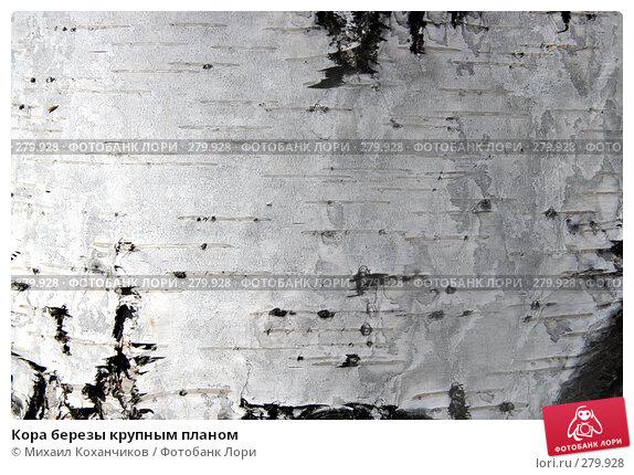 Кора березы крупным планом, фото № 279928, снято 1 мая 2008 г. (c) Михаил Коханчиков / Фотобанк Лори