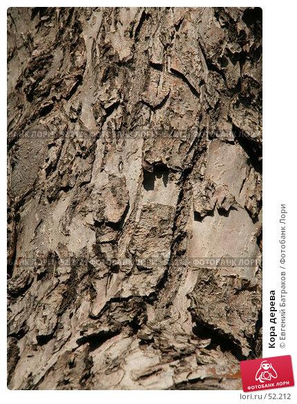 Кора дерева, фото № 52212, снято 27 мая 2007 г. (c) Евгений Батраков / Фотобанк Лори